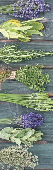 Ervas especiais para óleos essenciais Grandha, Alkymia di Grandha. Linha exclusiva de terapia capilar.