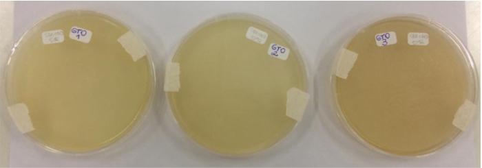 Óleo de melaleuca e alta frequência combatem fungo malassezia furfur.