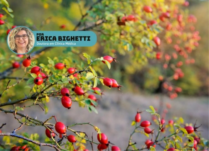 Fruto da rosa mosqueta fornece óleo vegetal.